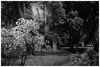 Plants and forest backdrop, Paramount lot. Hollywood, Los Angeles, California, USA ( black and white)
