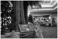 Interpretive sign, sequoias, and cafe, Fresno Yosemite Airport. California, USA ( black and white)