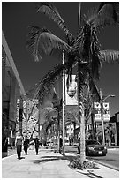 Rodeo Drive. Beverly Hills, Los Angeles, California, USA ( black and white)