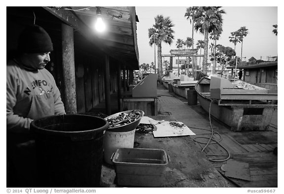 Fisherman, beachside fishing cooperative. Newport Beach, Orange County, California, USA (black and white)