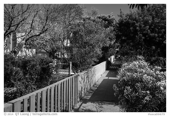 Pedestrial residential alley in springtime. Venice, Los Angeles, California, USA (black and white)