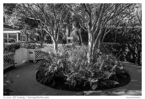 Trees in the center of pedestrian roundabout. Venice, Los Angeles, California, USA (black and white)