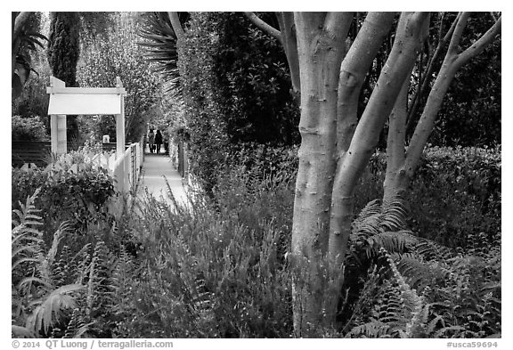 Lush vegetation surrounding residential alleys. Venice, Los Angeles, California, USA (black and white)