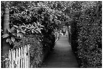 Lush pedestrian alley, with man walking dog in distance. Venice, Los Angeles, California, USA ( black and white)