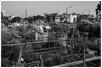 Community gardens. Santa Monica, Los Angeles, California, USA ( black and white)