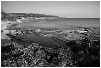 High bluff with flowers overlooking coastline in late afternoon. Laguna Beach, Orange County, California, USA ( black and white)