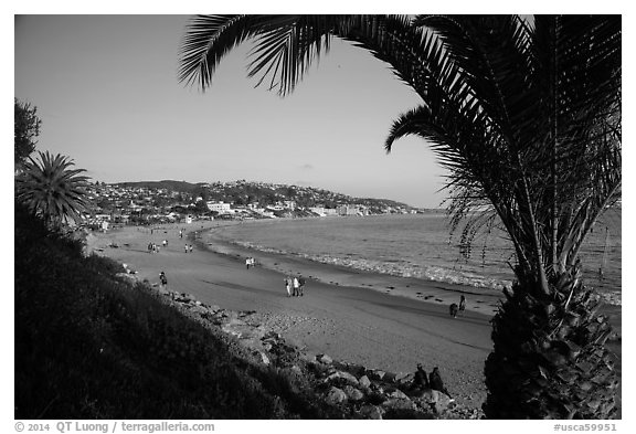 Black and white picture photo beach framed by palm tree laguna beach orange county california usa