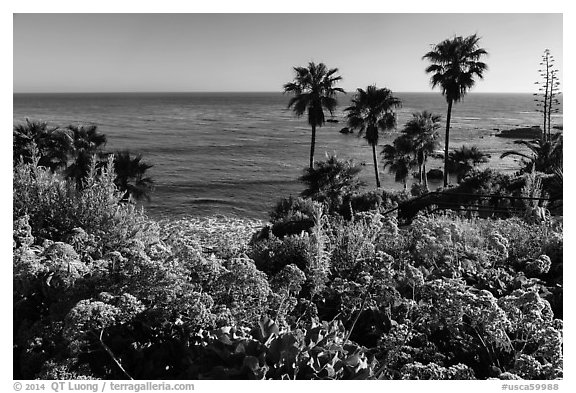 Flowers, palm trees, and ocean. Laguna Beach, Orange County, California, USA (black and white)