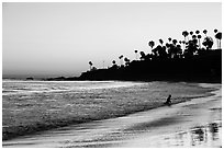 Beach at sunset with silhouettes of palm trees and beachgoer. Laguna Beach, Orange County, California, USA ( black and white)