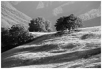 Oaks and hills, Temblor Range. California, USA ( black and white)