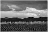 Field, bare trees, hills, and clouds. California, USA ( black and white)