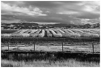 Agricultural lands in the spring. California, USA ( black and white)