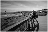 Visitors observe Piedras Blancas seal rookery from boardwalk. California, USA ( black and white)