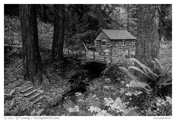 Cabin in the redwood forest. Big Sur, California, USA (black and white)