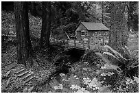 Cabin in the redwood forest. Big Sur, California, USA ( black and white)