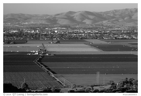 Agricultural lands in Salinas Valley. California, USA (black and white)