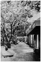 Sidewalk with fresh snow at night, Truckee. California, USA ( black and white)