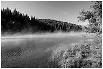 Early morning fog raising from Jenkinson Lake. California, USA ( black and white)