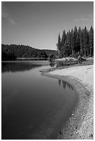 Lakeshore and pines, Jenkinson Lake. California, USA ( black and white)
