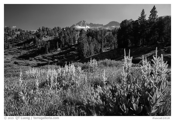 Meadows, trees, and Sierra Nevada crest, Twenty Lakes Basin. California, USA (black and white)