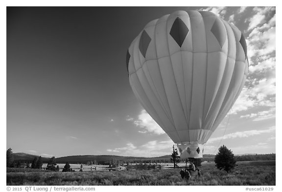 Hot air balloon carried after landing, Tahoe National Forest. California, USA (black and white)