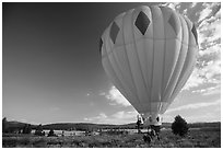 Hot air balloon carried after landing, Tahoe National Forest. California, USA ( black and white)