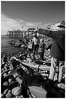 Abalone divers. California, USA ( black and white)