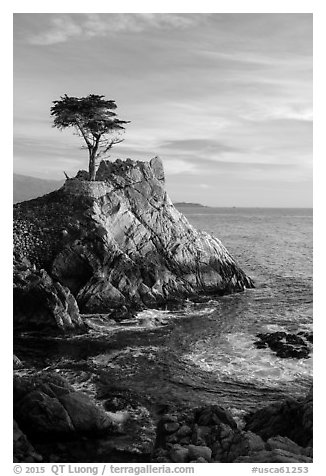 Lone Cypress. Pebble Beach, California, USA (black and white)