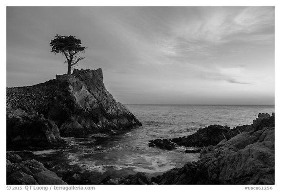 Lone Cypress and cove at sunset. Pebble Beach, California, USA (black and white)