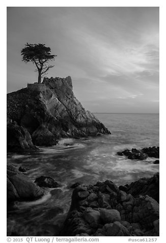 Lone Cypress and cloud painted by sunset. Pebble Beach, California, USA (black and white)