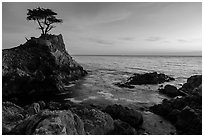 Lone Cypress clinging to its wave-lashed granite pedestal. Pebble Beach, California, USA ( black and white)