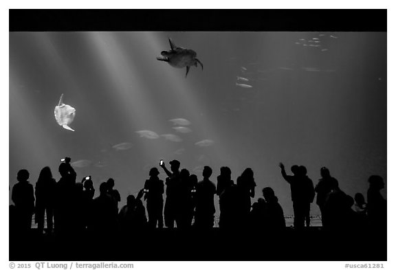 Tourists crowd outer ocean exhibit, Monterey Bay Aquarium. Monterey, California, USA (black and white)