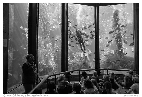 Scuba diver feeds fish in front of audience. Monterey, California, USA (black and white)