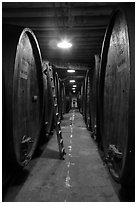 Huge barrels, Korbel Champagne Cellars, Guerneville. California, USA ( black and white)