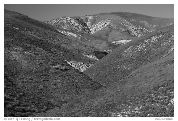 Wildflowers-covered hills, Temblor Range. Carrizo Plain National Monument, California, USA (black and white)