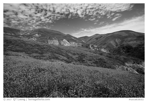 Temblor Range hills covered with wildflower mats. Carrizo Plain National Monument, California, USA (black and white)