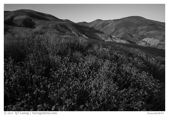 Yellow wildflower map and Temblor Range hills, late afternoon. Carrizo Plain National Monument, California, USA (black and white)