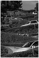 Lombard Street from the bottom with cars on turns. San Francisco, California, USA ( black and white)