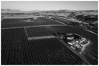 Aerial view of vineyards and wineries in summer. Livermore, California, USA ( black and white)
