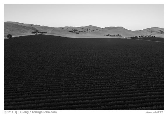 Aerial view of vineyards and hills at sunset. Livermore, California, USA (black and white)