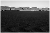 Aerial view of vineyards and hills at sunset. Livermore, California, USA ( black and white)