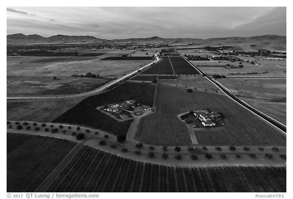 Aerial view of vineyards and wineries in summer, sunset. Livermore, California, USA (black and white)