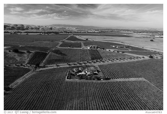 Aerial view of vineyards and wineries in autumn. Livermore, California, USA (black and white)