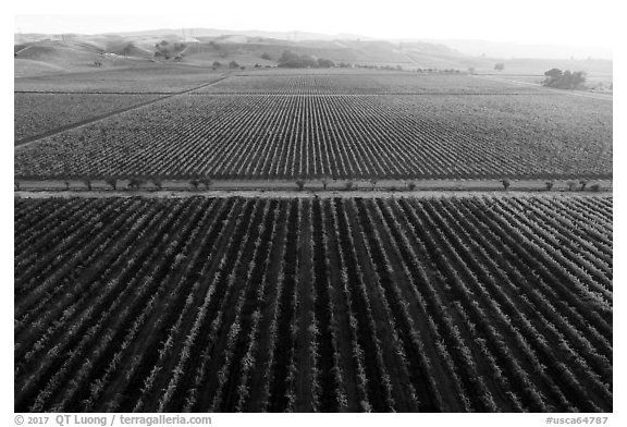 Aerial view of vineyards and hazy hills in autumn. Livermore, California, USA (black and white)