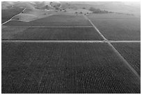 Aerial view of multicolored vineyards in autumn. Livermore, California, USA ( black and white)