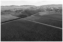 Aerial view of multicolored vineyards and hills in the fall. Livermore, California, USA ( black and white)