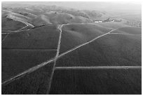 Aerial view of autumn vineyards with hazy hills. Livermore, California, USA ( black and white)