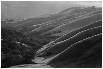 Oaks and ridges, late afternoon, Del Valle Regional Park. Livermore, California, USA ( black and white)