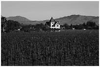 Winery. Livermore, California, USA ( black and white)