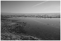 Salton Sea shore near Bombay Beach. California, USA ( black and white)